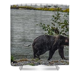 Grizzly Bear Late September 5 Shower Curtain