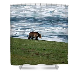 Shower Curtain featuring the photograph Grizzly Bear On The Shoreline Of Frozen Lake Yellowstone by Shawn O'Brien