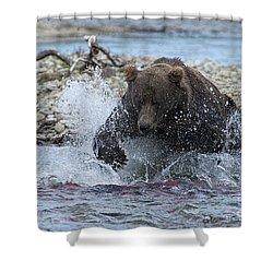 Brown Bear Pouncing On Salmon Shower Curtain by Dan Friend