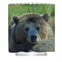 Grizzly Bear Resting Shower Curtain by Garry Gay