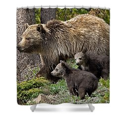 Grizzly Bear With Cubs Shower Curtain