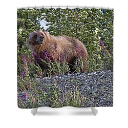 Grizzly Shower Curtain by David Gleeson