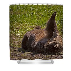 Shower Curtain featuring the photograph Grizzly by J L Woody Wooden