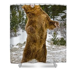 Grizzly Standing Shower Curtain by Jerry Fornarotto