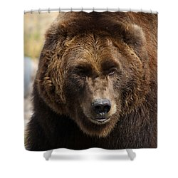 Grizzly Shower Curtain by Steve McKinzie