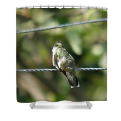 Shower Curtain featuring the photograph Grooming Hummer by Nick Kirby