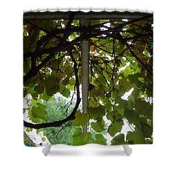 Shower Curtain featuring the photograph Gropius Vine by Joseph Skompski