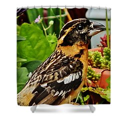 Shower Curtain featuring the photograph Grosbeak Profile by VLee Watson