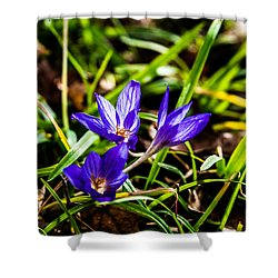 Hocus Crocus Shower Curtain