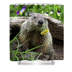 Groundhog  Kit Marmota Monax Shower Curtain by Debbie Dicarlo
