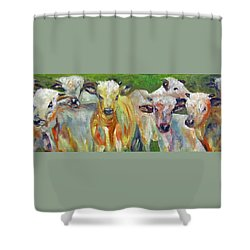 The Gathering, Cattle   Shower Curtain