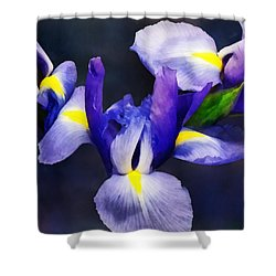 Group Of Japanese Irises Shower Curtain by Susan Savad