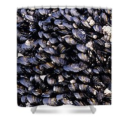 Group Of Mussels Close Up Shower Curtain