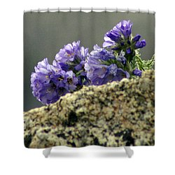 Shower Curtain featuring the photograph Growing In Granite by Jeremy Rhoades
