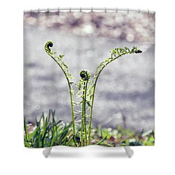 Shower Curtain featuring the photograph Growing  by Kerri Farley