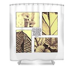 Shower Curtain featuring the photograph Growth by John Hansen