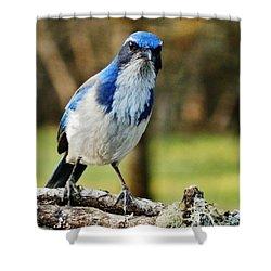 Grumpy Jay Shower Curtain by VLee Watson