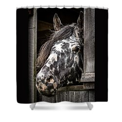 Guard Horse-what's The Password? Shower Curtain