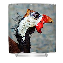Guinea Hen Shower Curtain