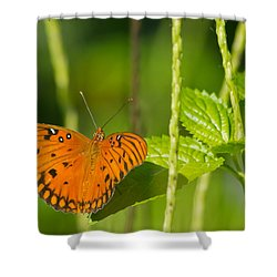 Shower Curtain featuring the photograph Gulf Fritillary by Jane Luxton