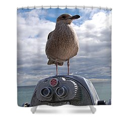 Shower Curtain featuring the photograph Gull by Mim White
