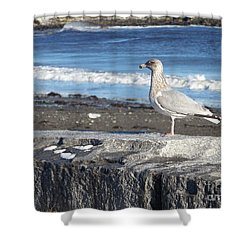 Shower Curtain featuring the photograph Seagull  by Eunice Miller