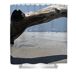 Gulls Away Shower Curtain by Bob Hislop
