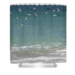 Gulls Flying Over The Ocean Shower Curtain by Zina Stromberg