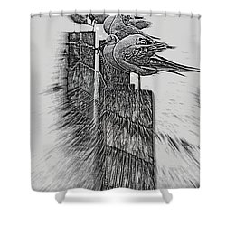Gulls In Pencil Effect Shower Curtain by Linsey Williams