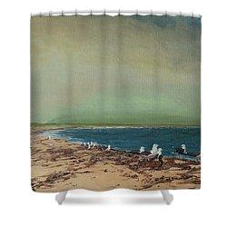 Gulls On The Seashore Shower Curtain
