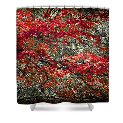 Gum Fall Shower Curtain by Lana Trussell