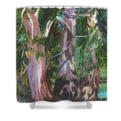Gum Trees In Oz Shower Curtain by Carol Wisniewski