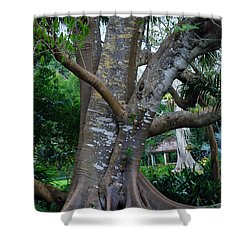 Gumby Tree Shower Curtain