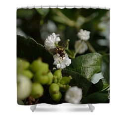 Gypsophilia Hover Fly Shower Curtain