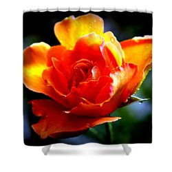 Gypsy Rose Shower Curtain by Karen Wiles