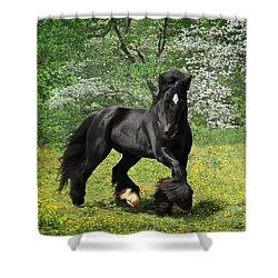 Gypsy Stallion Shadow Shower Curtain by Fran J Scott
