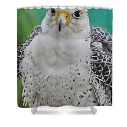 Gyrfalcon Shower Curtain by Deborah Benoit