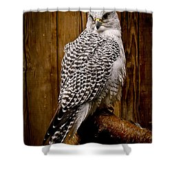 Gyrfalcon Perched Shower Curtain by Steve McKinzie