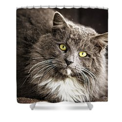 Hairy Ears Shower Curtain