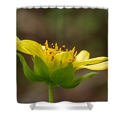Shower Curtain featuring the photograph Hairy Leafcup by Paul Rebmann