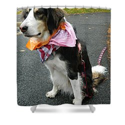 Shower Curtain featuring the photograph Haley The Wonder Dog by Emmy Marie Vickers
