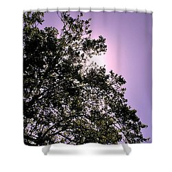 Half Tree Shower Curtain by Matt Harang