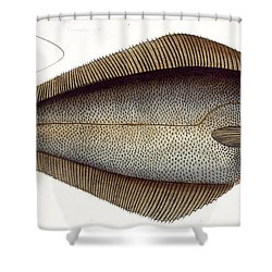 Halibut Shower Curtain by Andreas Ludwig Kruger