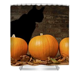 Halloween Pumpkins And The Witches Cat Shower Curtain by Amanda Elwell