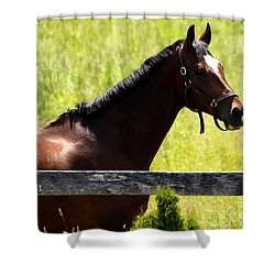 Handsom Horse Shower Curtain