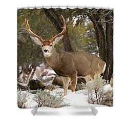 Handsome Buck Shower Curtain by Donna Kennedy