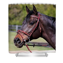 Handsome Gelding Shower Curtain