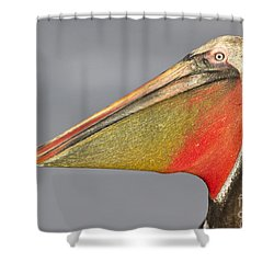 Shower Curtain featuring the photograph Handsome In Red by Bryan Keil