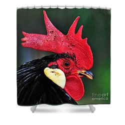 Handsome Rooster Shower Curtain by Kaye Menner