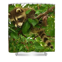 Shower Curtain featuring the photograph Hang In There by James Peterson